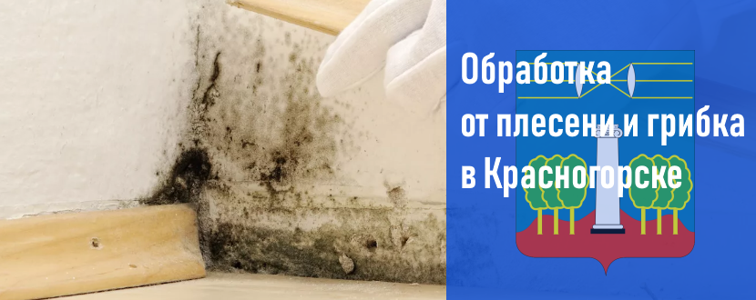 Обработка от плесени и грибка в Красногорске
